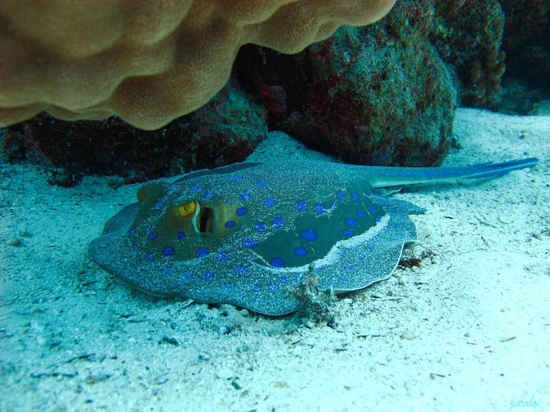 http://www.3dtravels.ru/trips/2012-05-eg-hrg/img/Egypt2012-024-GotaAbuRamadaE.jpg